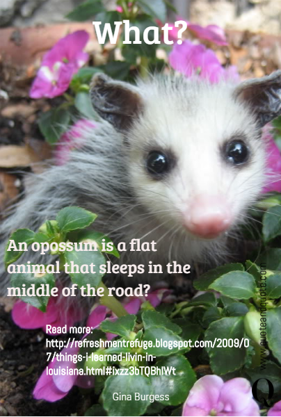 What? An opossum is a flat animal that sleeps in the middle of the road? Read more: http://refreshmentrefuge.blogspot.com/2009/07/things-i-learned-livin-in-louisiana.html#ixzz3bTQBhlWt